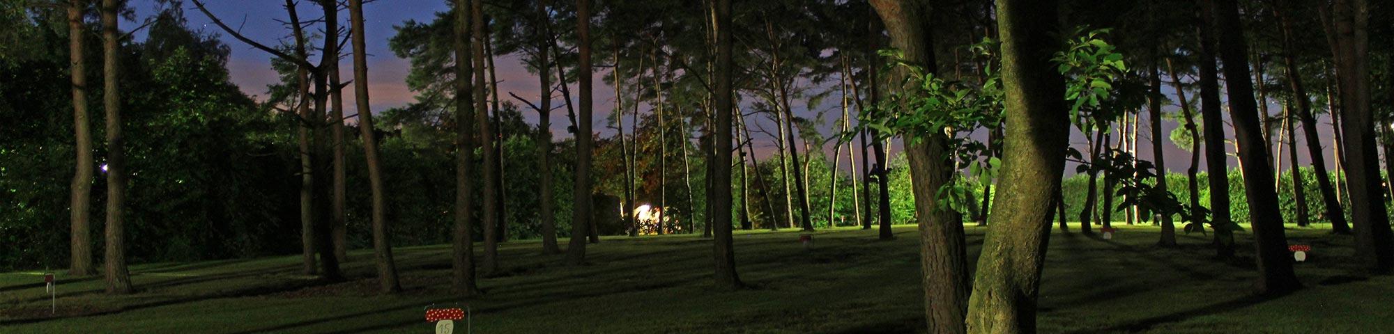 Nacht_bos